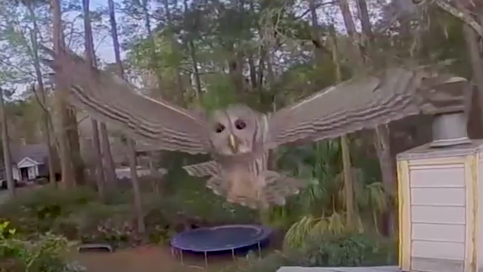 Watch Owls Drone Mid Flight