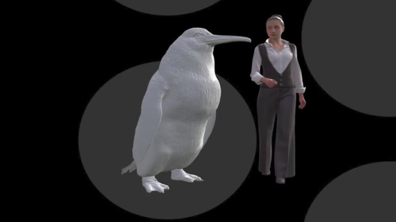 Giant, Human-Sized Penguin Fossils Discovered in New Zealand