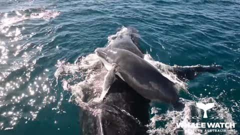 (Whale Watch WA)