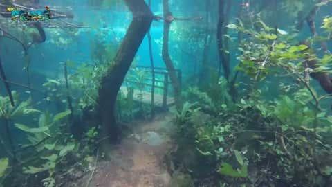 (Youtube/Recanto Ecológico Rio da Prata)
