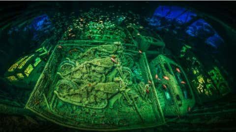 (2018 Underwater Photographer Of The Year/Tobias Friedrich)