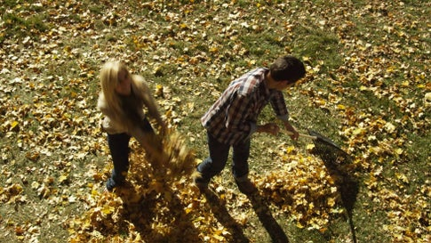 Is Raking Leaves Bad for the Environment?