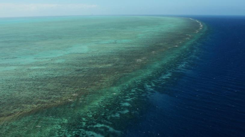Great Barrier Reef Undergoing Widespread Bleaching Event