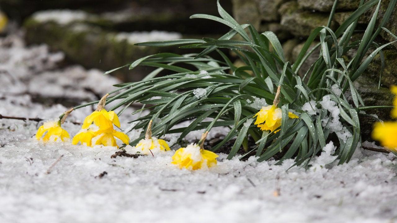 Expert warns of colder threat to start Spring