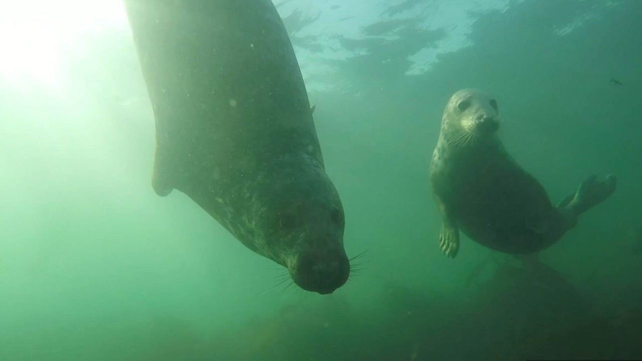 Wild 'Clapping' Seal Captured on Camera for First Time