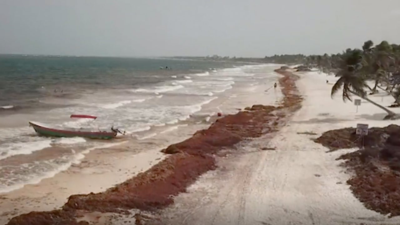 Top vacation destinations are being ruined by the mess of  sargassum