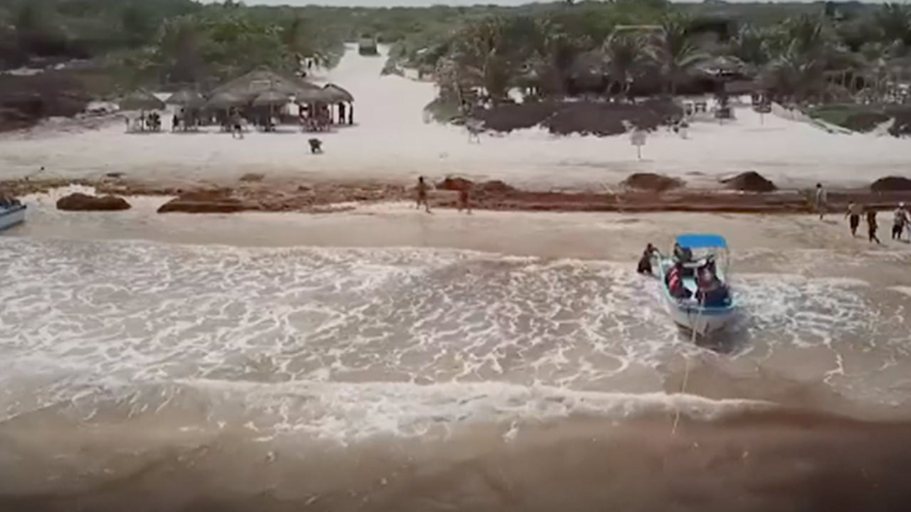 Rotting Sargassum Seaweed Piles Up on Mexico's Popular Beaches | The