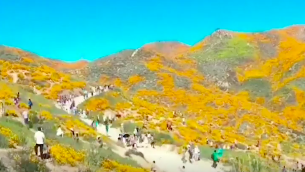 Outbreak of Blooming Wildflowers Draws Too Many Visitors