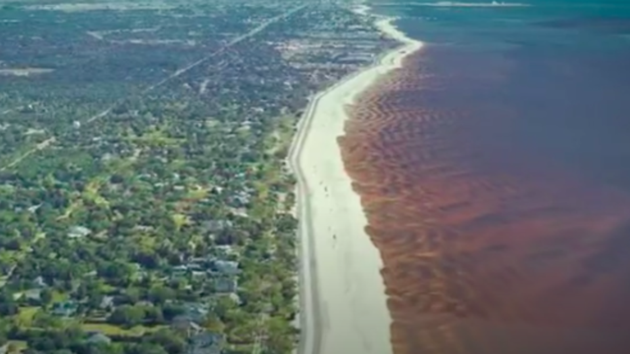 Toxic Algae Closes All Beaches in Mississippi | The Weather