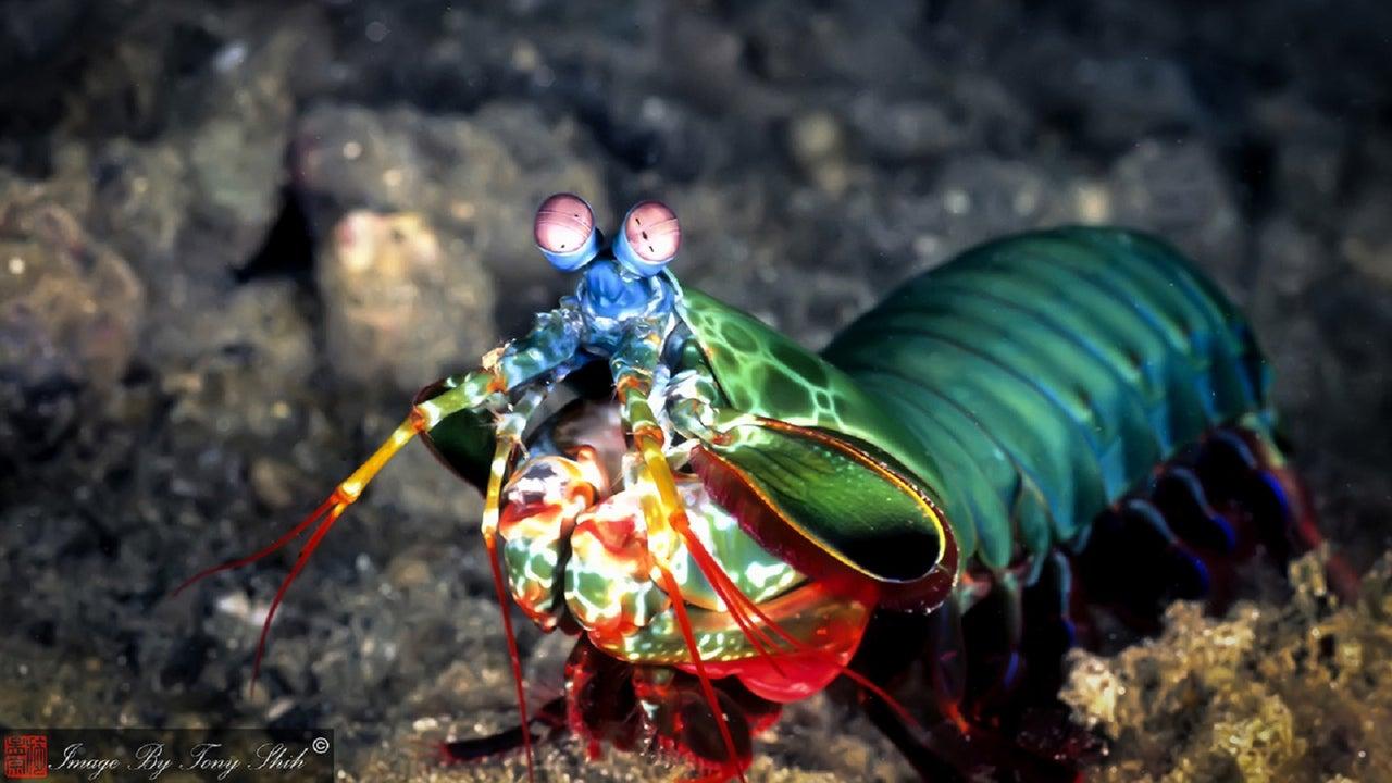 Viele Tiere an Land und im Wasser leuchten in allen möglichen Farben eines Regenbogens. Die Gründe dafür sind so vielseitig wie die Farben selbst.
