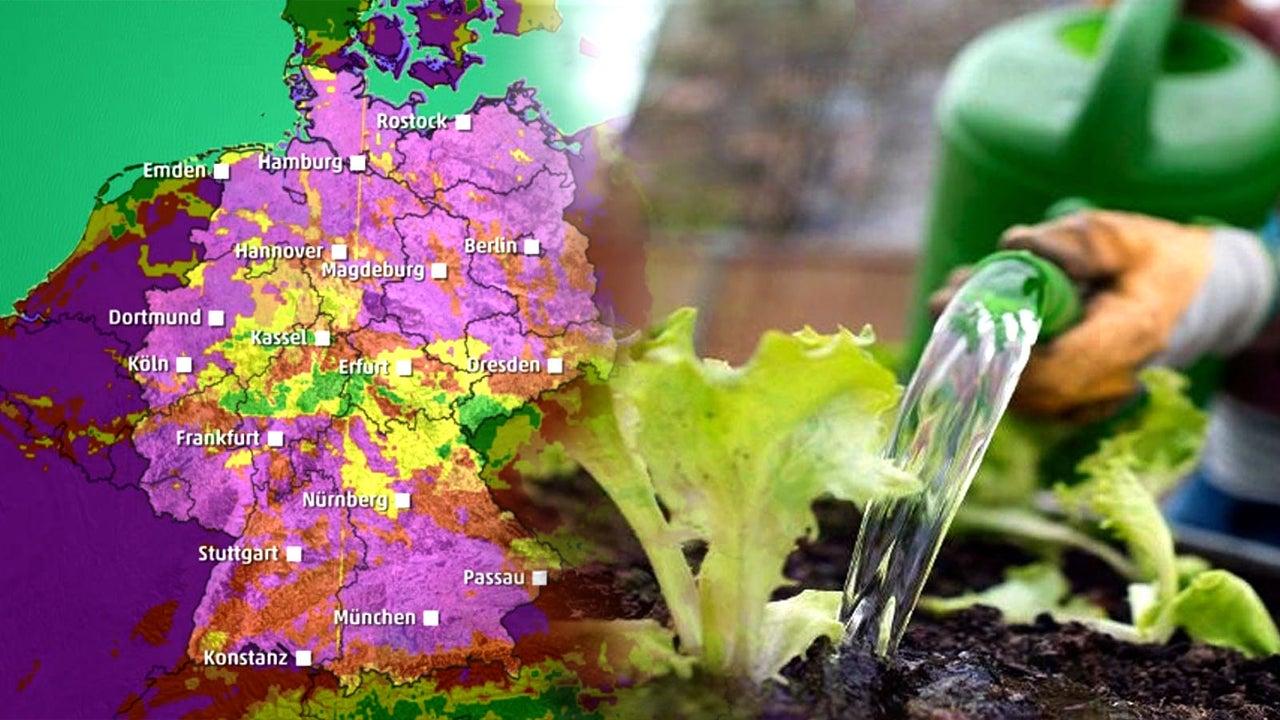 Gieß-Index: Wo Pflanzen jetzt besonders viel Wasser brauchen