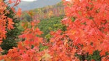 Warm Summer Means Fall Foliage Peaks Later