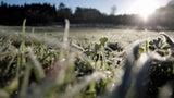 DWD warnt vor Frost: Temperaturen fallen in der Nacht unter Gefrierpunkt