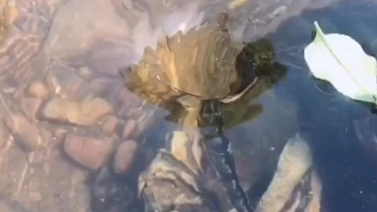 A small whirlpool in a river in southern China slowly sucks down leaves — and it's bizarrely gratifying to watch.