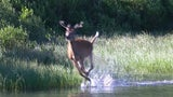 'Zombie' Deer in 24 States Pose Big Risk During Hunting Season