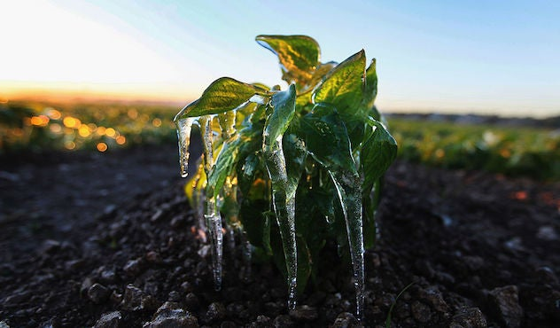 Thumbnail for New Insight on Why Frost-Free Seasons Are Getting Longer