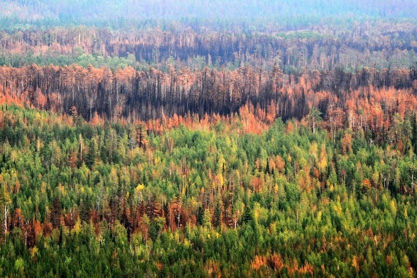 Massive wildfires continue to rage in the Krasnoyarsk Krai, Sakha Republic, and Zabaykalsky Krai regions of Siberia as of August 6