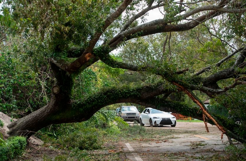A tree downed by winds from Hurricane Irma blocks a road in Coconut Grove, Florida, on 9/11/2017