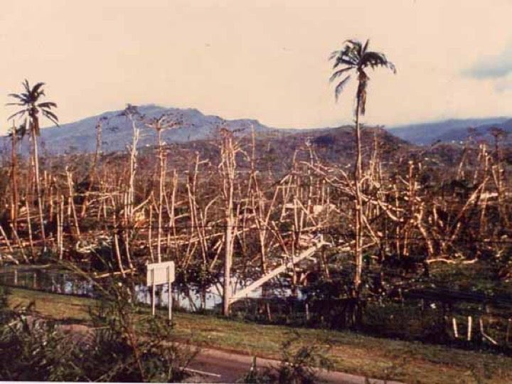 Damage to Puerto Rico's El Yunque rain forest from Hurricane Hugo, 9/18/1989