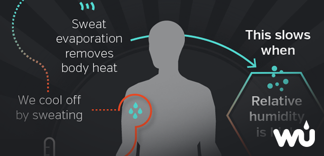 Heat and the Human Body