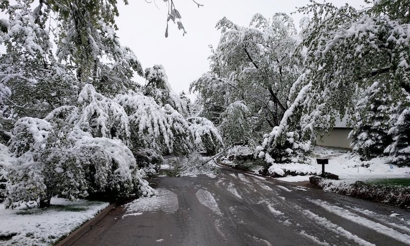 Trees groaned under the weight of snowfall in Boulder, Colorado, on Tuesday morning, May 21, 2018