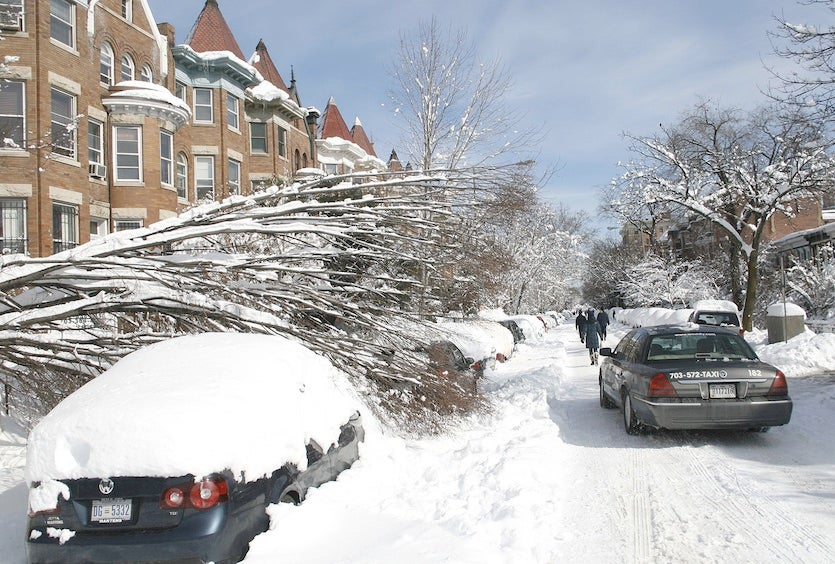 A fallen tree on the 1700 block of T Street NW in Washington, D.C., following the Snowmaggeddon storm of February 2010