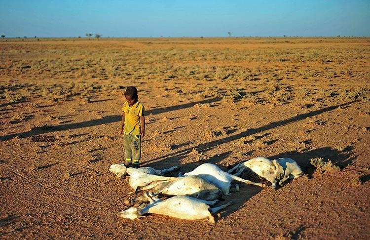 Drought in Somali