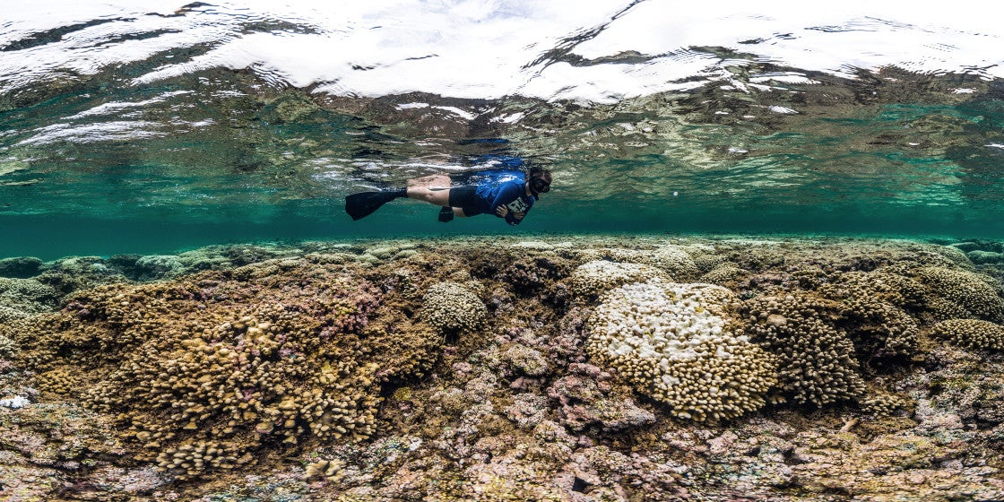Great Barrier Reef: Before and After Bleaching (PHOTOS ...